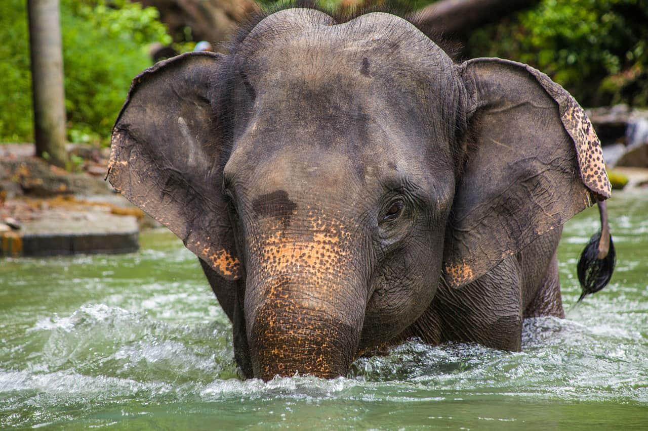 Stap van de olifant af