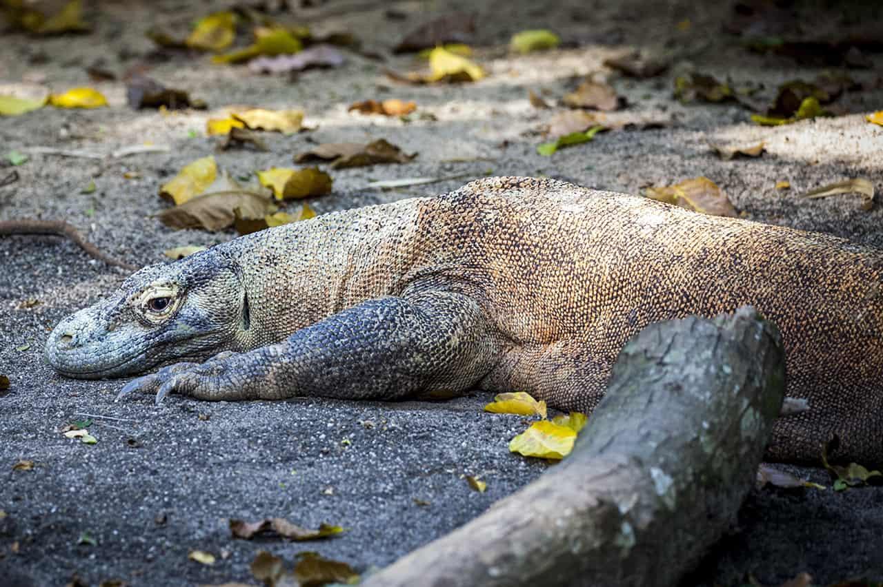 Komodo eiland