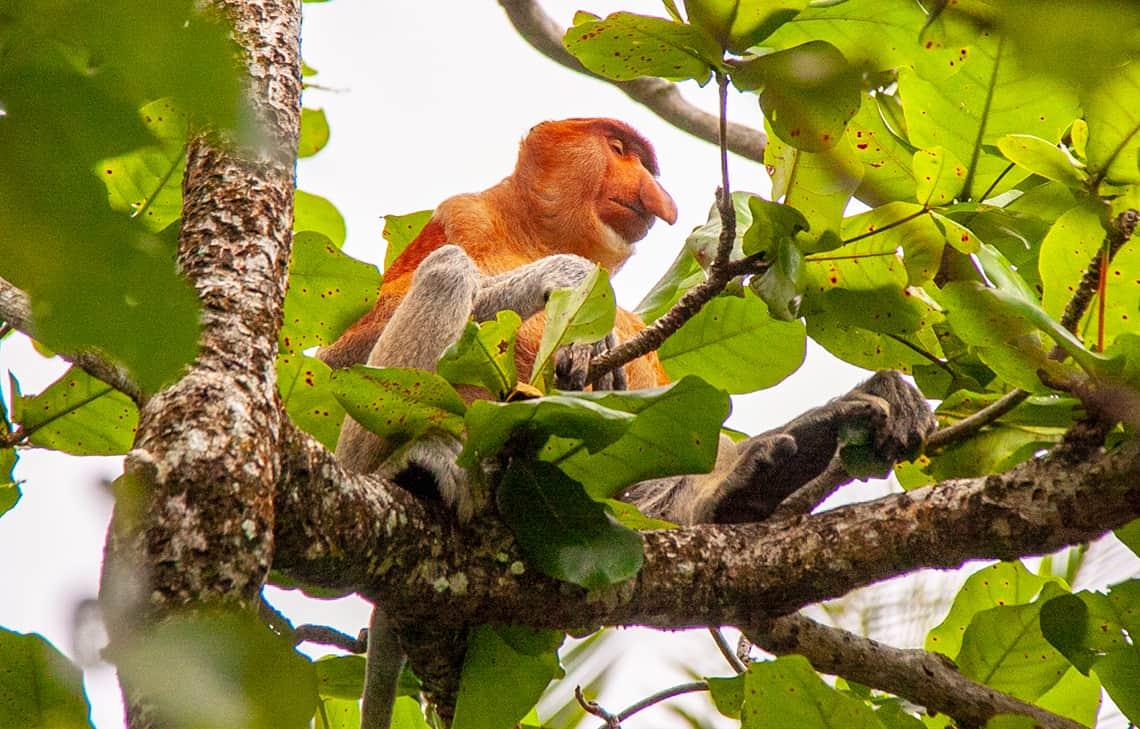 Bako Nationaal Park