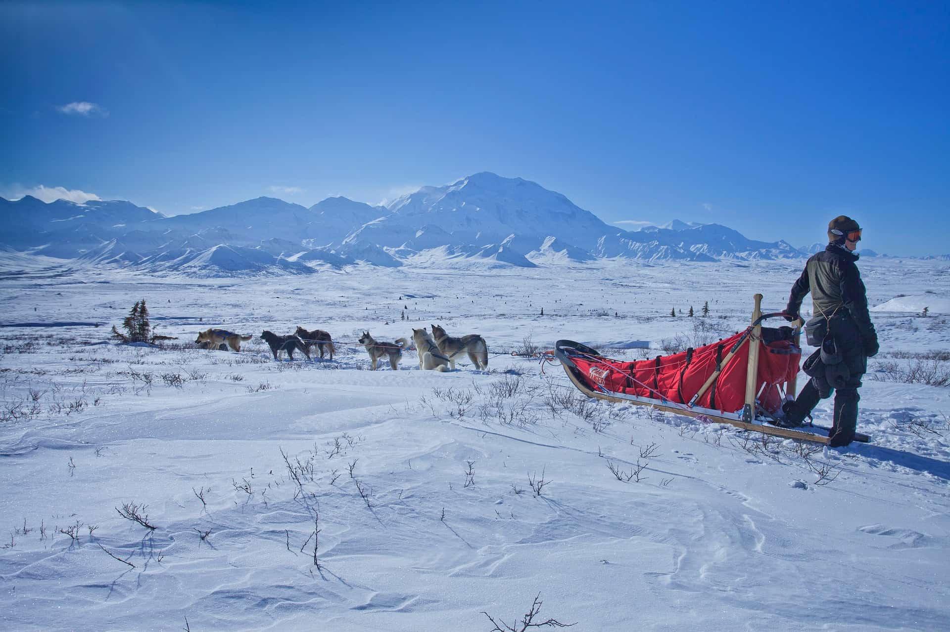 Met een hondenslee door Alaska