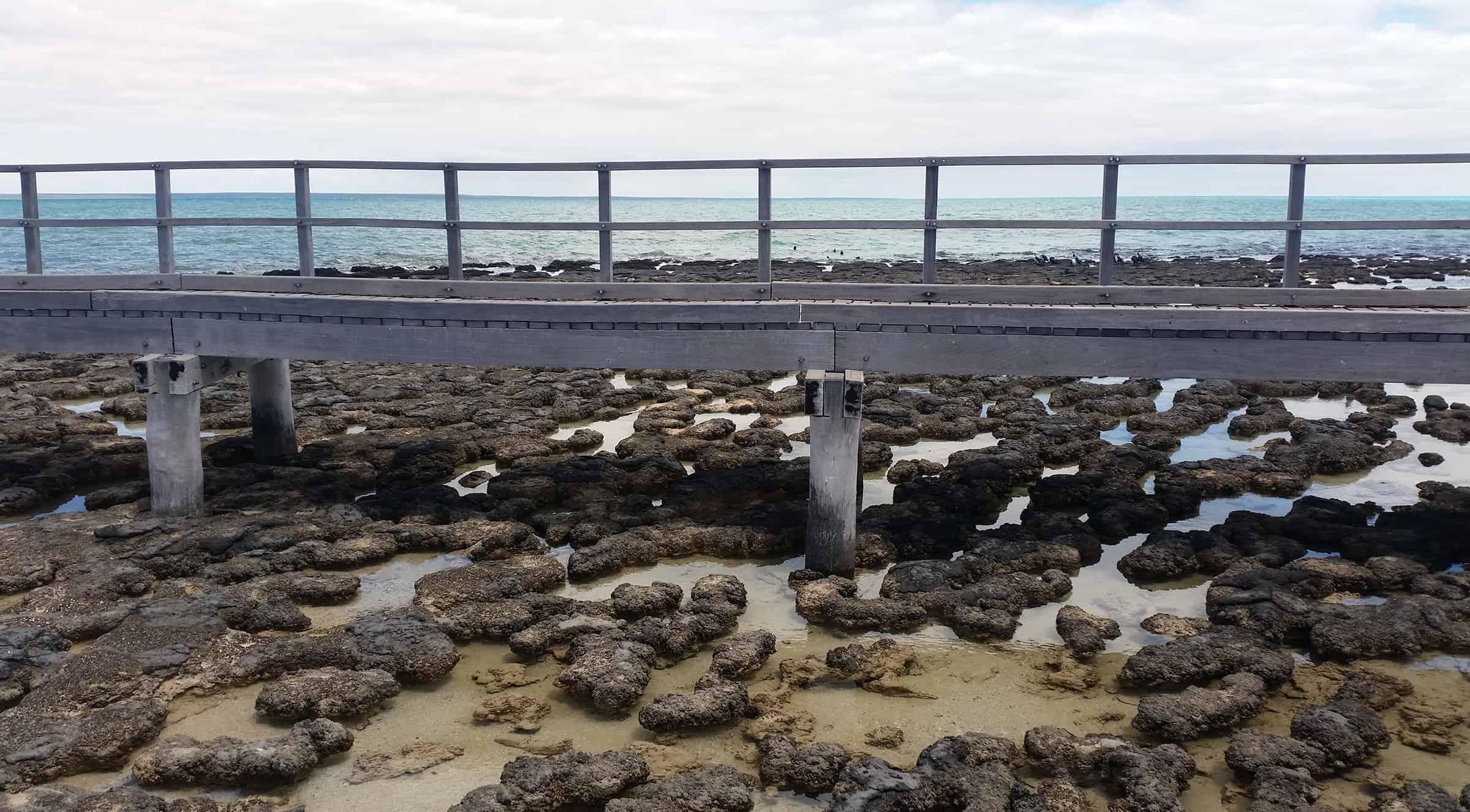 De Stromatolites van Hamelin Pool