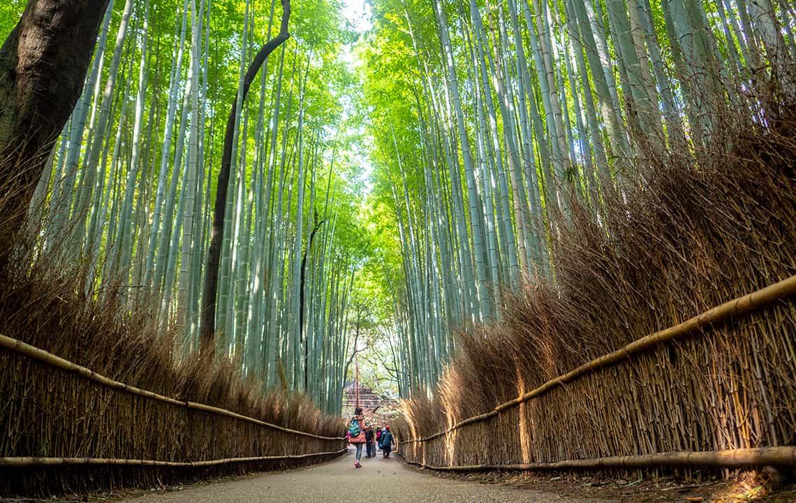 Arashimaya bamboebos
