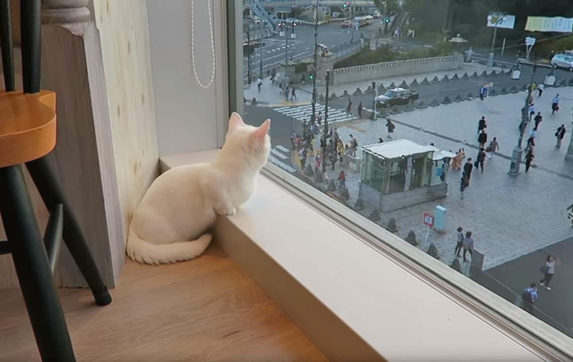 Kattencafe